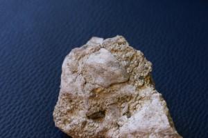 Špela Ulaga: Fosili v Zasavju